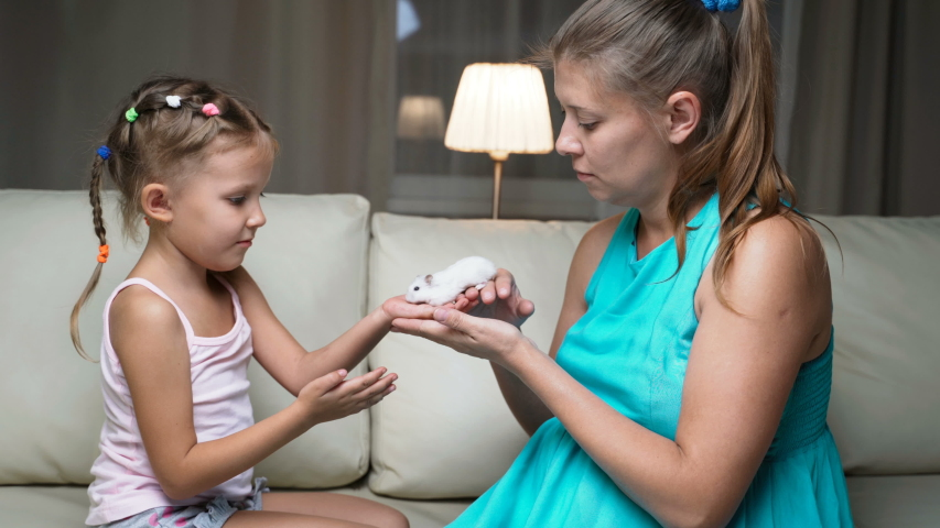 Little Girl Child Home On Sofa With Mother Playing Together With Pet Hamster   Shutterstock HD Video #1037314514