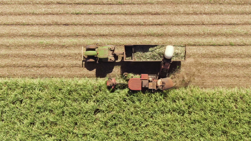 Aerial: Wide and Closeup variety of shots showing harvesting machine cutting down ripe sugarcane crop ready to be transported and refined. Sustainable Biofuel and Organic food concept. | Shutterstock HD Video #1038082064