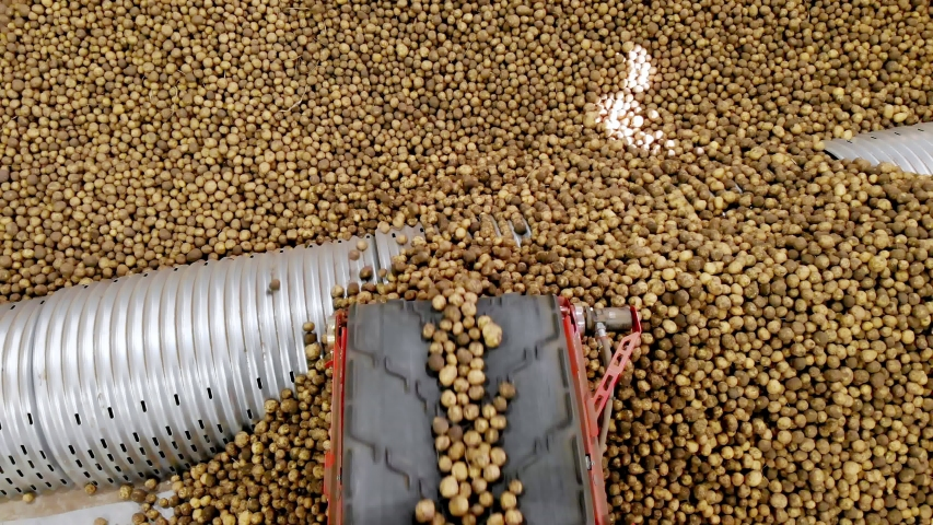 Close-up, Potatoes move on special conveyor machinery belt and fit into a storage room, a warehouse for winter storage. potato harvesting, crop | Shutterstock HD Video #1038773894