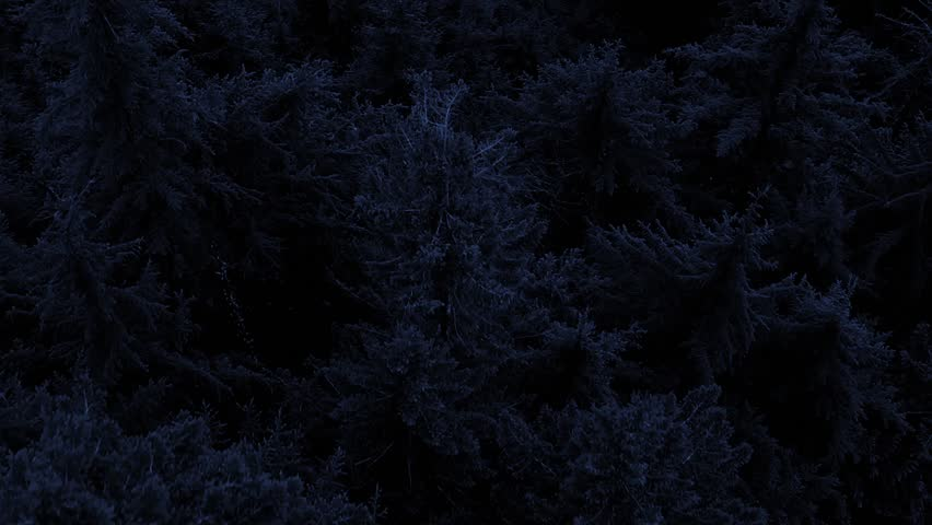 Flying Over Forest At Night