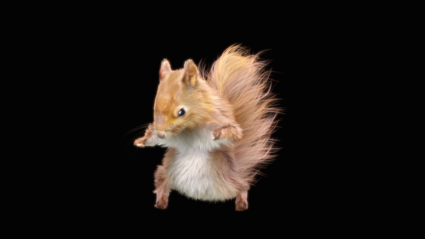 Squirrel Dance CG fur 3d rendering animal realistic CGI VFX Animation Loop, with Alpha matte | Shutterstock HD Video #1039050224