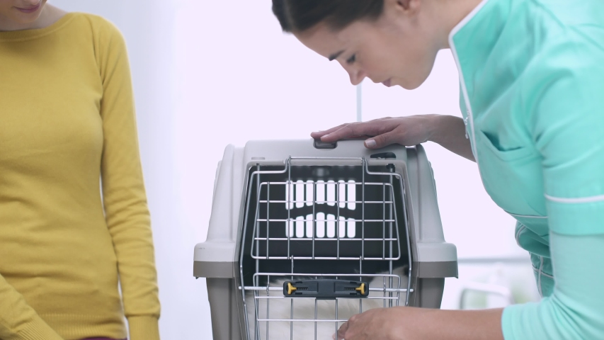 Young woman bringing her cat at the veterinary clinic in a pet carrier, the vet opens the grid and the cat comes out | Shutterstock HD Video #1039229384