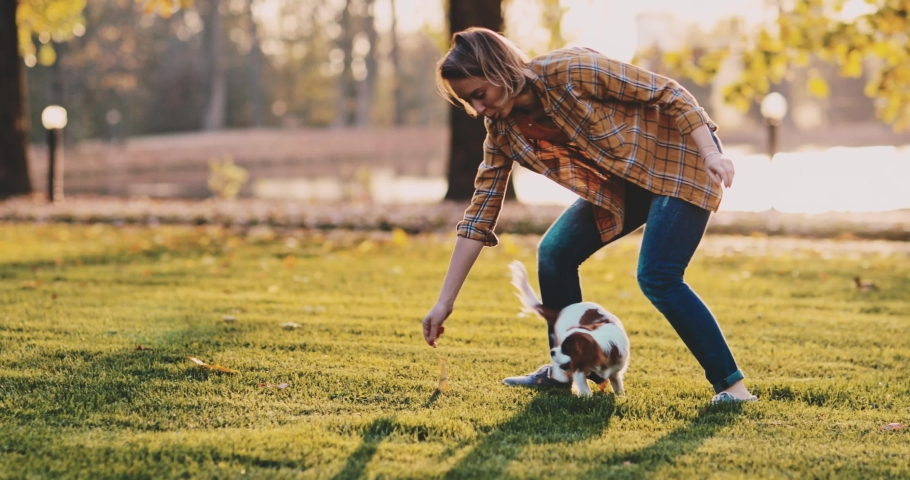 Woman Playing With Puppy In The Park. SLOW MOTION. Cavalier King Charles Spaniel baby dog enjoying sunny sunset outdoors, running and jumping with laughing girl. Pet and owner love. | Shutterstock HD Video #1040364764