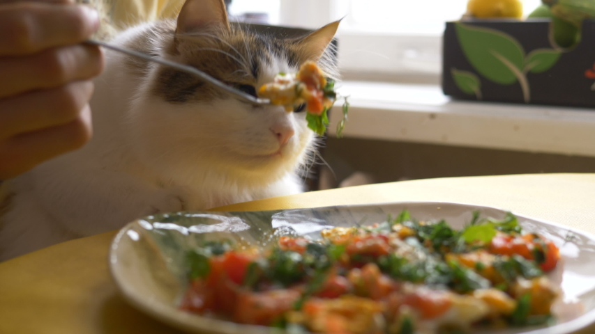 Man holding fork eats delicious warm scrambled eggs for breakfast and teases beautiful hungry cat sitting in arms at table   Shutterstock HD Video #1040396324