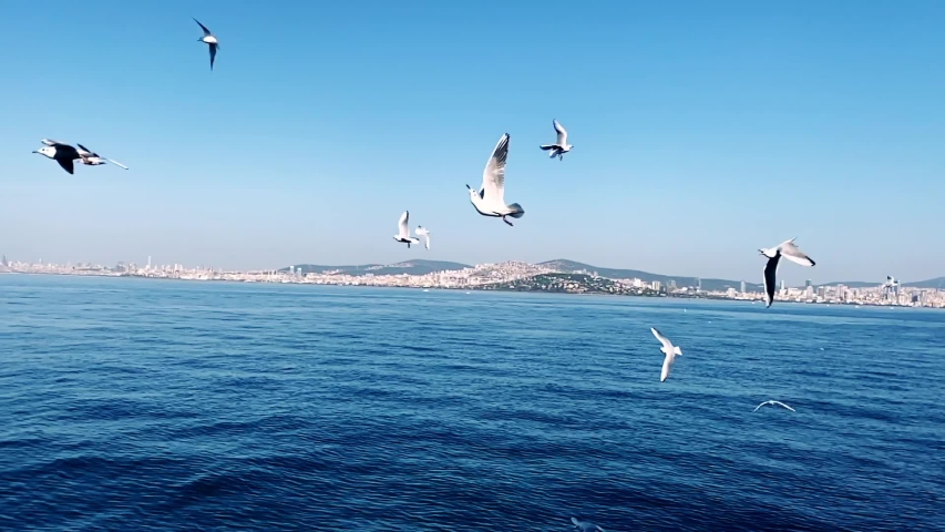 People are feeding seagulls while ferry moves | Shutterstock HD Video #1041091954