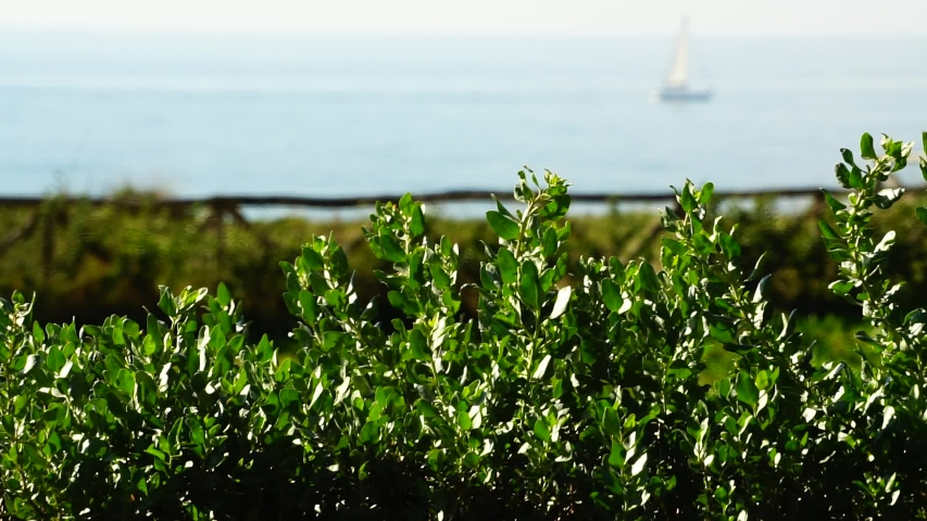 Green plants in the foreground with seascape with sailboats in the blurred background. on a sunny day | Shutterstock HD Video #1041112894