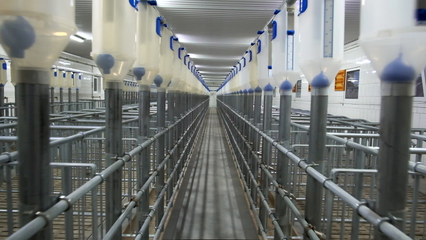 Interior of a new and empty pig farm. New equipment. | Shutterstock HD Video #1041928624