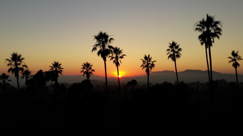 Aerial shot of a row of palm trees at Sunset | Shutterstock HD Video #1042426684
