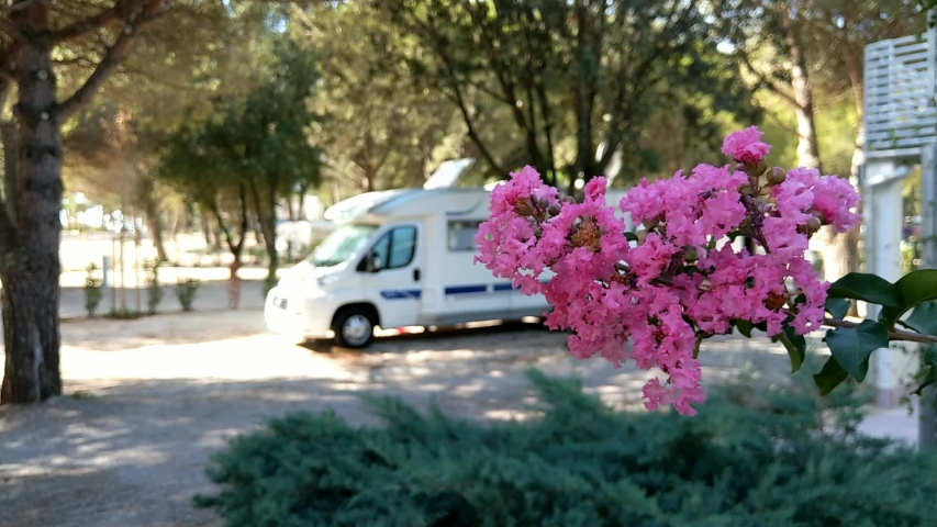 Beautiful summer car camping on a hot day | Shutterstock HD Video #1042791454