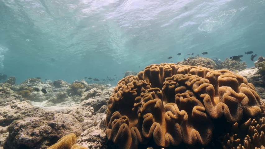 Slow motion shot Diver on background School of fish underwater landscape in Kepulauan Banda Indonesia. Swimming in world colorful beautiful wildlife of reefs and algae. Inhabitants in search of food. | Shutterstock HD Video #1042808794
