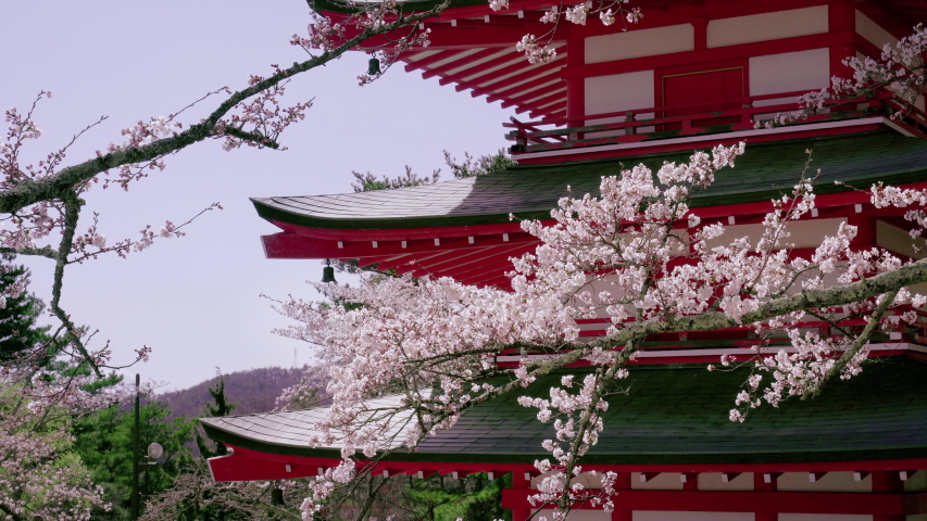Cherry blossoms at Chureito pagoda in Spring, Japan. | Shutterstock HD Video #1042973644