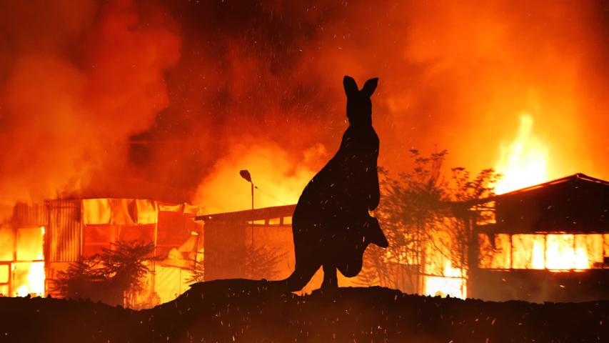 Kangaroo On Hill Caught In The Austalian Wildfire   Shutterstock HD Video #1044280474
