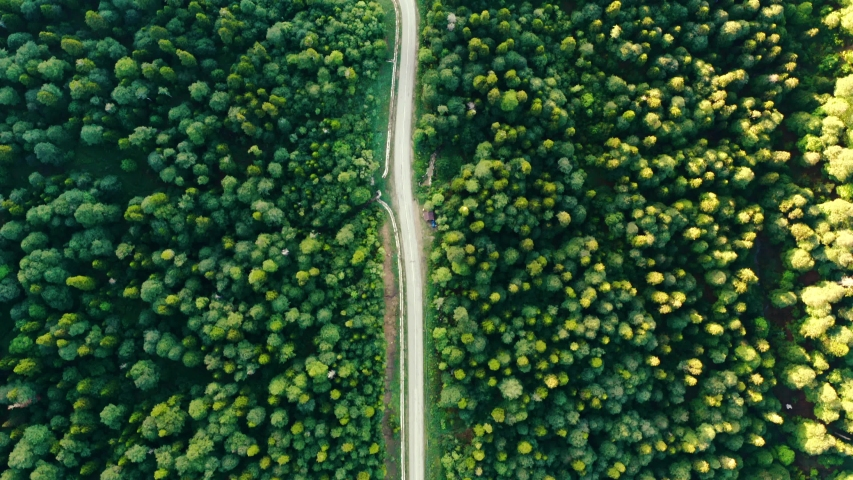 A picturesque road laid through a dense forest. Drone shooting | Shutterstock HD Video #1044783334