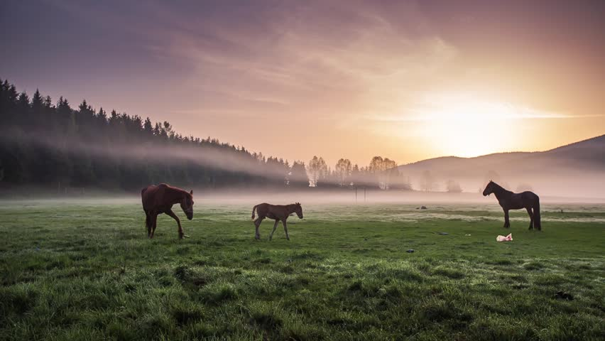 The Mountain landscape with grazing horses