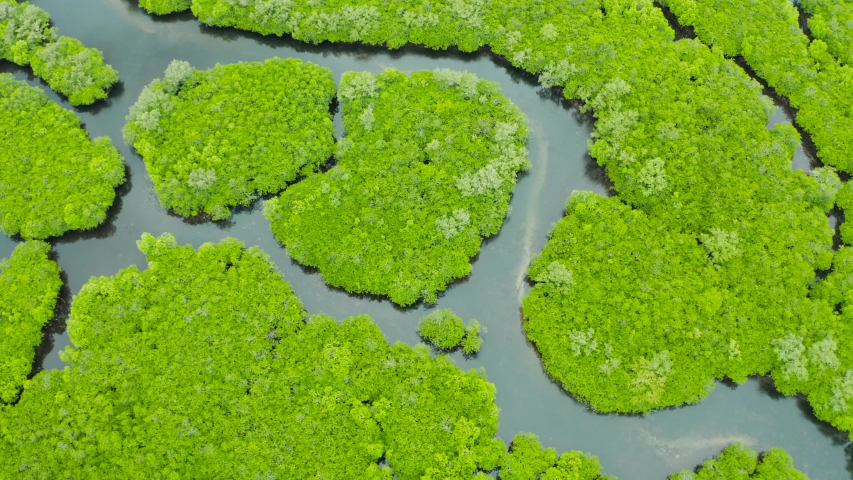 Mangrove green forests with rivers and channels on the tropical island, aerial drone. Mangrove landscape. | Shutterstock HD Video #1045021414