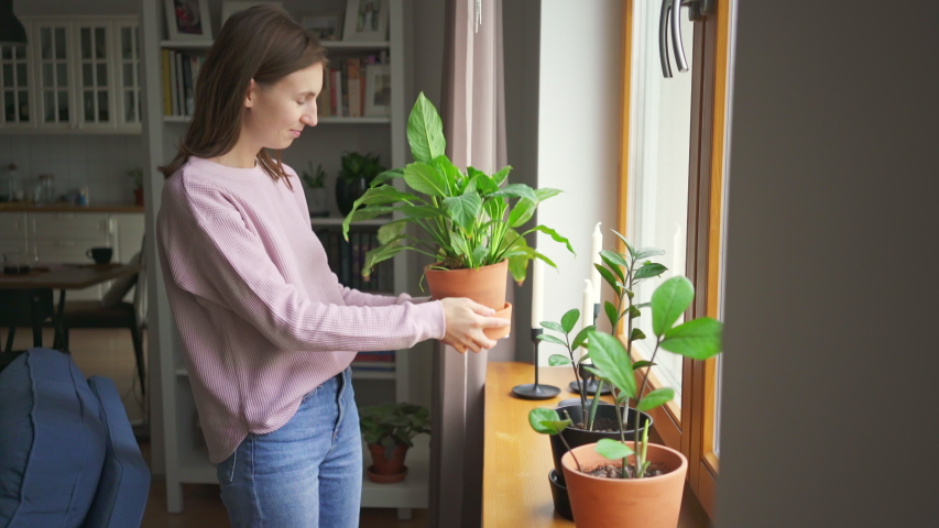 Young woman puts plants on a windowsill in her trendy city apartment. Girl decorates the apartment. Creates comfort at home. 4k | Shutterstock HD Video #1047081394