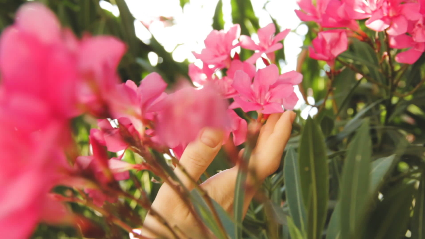 Woman Florist Touching and Checking Flowers in Garden. Between the Bushes and Branches . Close up Shot of Woman's Hand on Daylight.   Shutterstock HD Video #1049182084