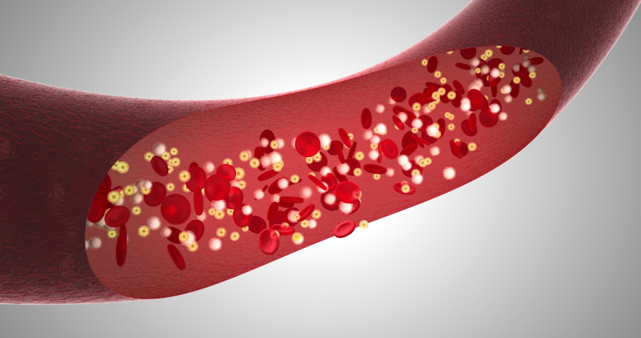 Blood movement in the vessel, capillaries, red blood cells, white blood cells, vessel, cardiovascular system, blood pressure   Shutterstock HD Video #1049595064
