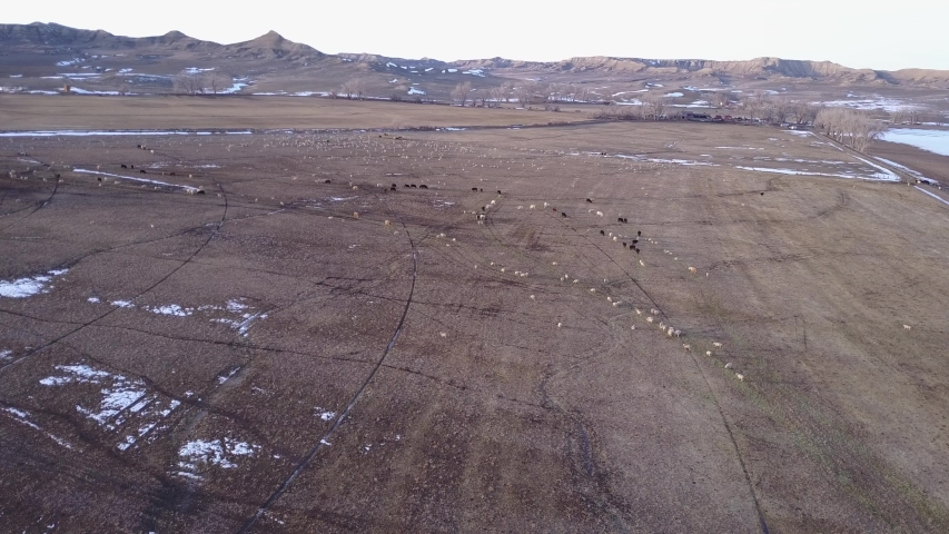 Drone Aerial of Sheep and Cattle Herd Ranch Livestock and Farmstead | Shutterstock HD Video #1049724664