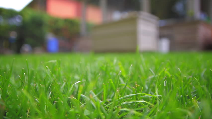A freshly mowed lawn in a suburban backyard.