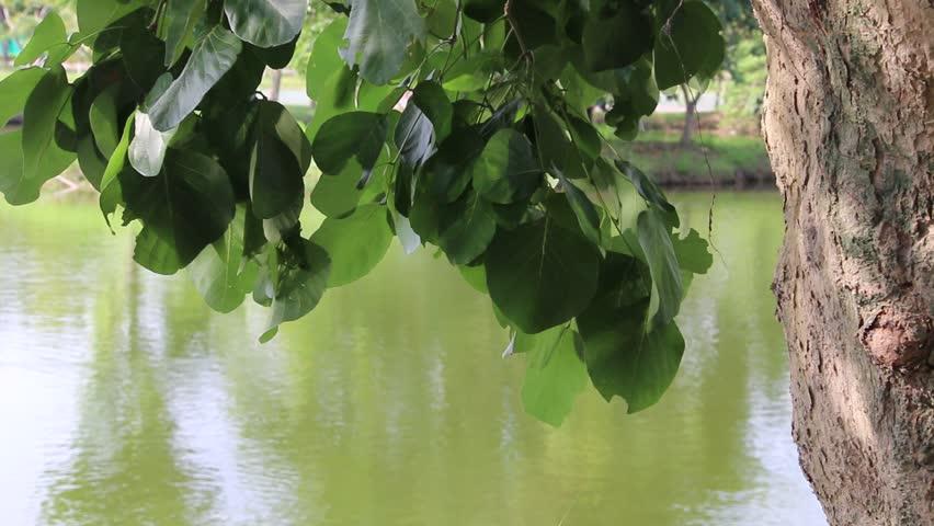 Light reflex from lake to leaf | Shutterstock HD Video #10720064