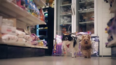 Dogs run through a pet store in slow motion.