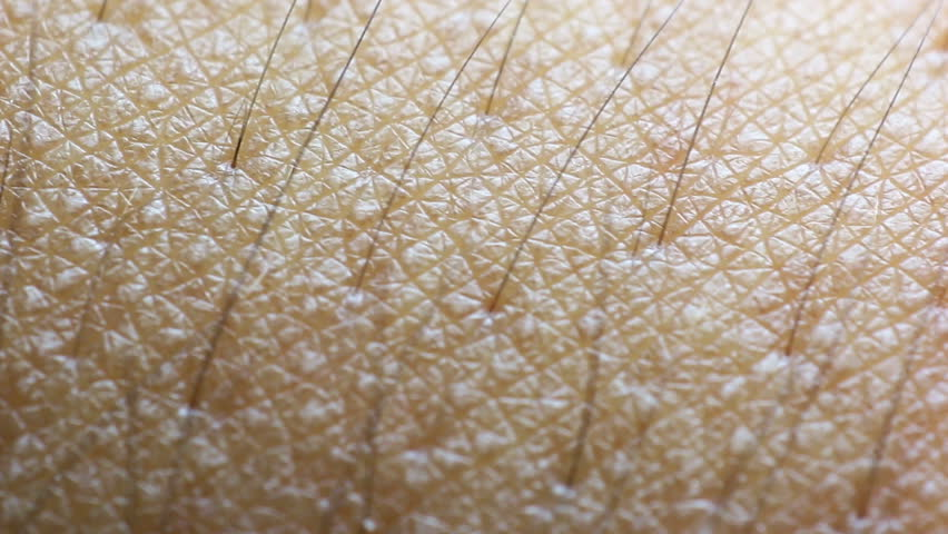 Human skin closeup macro shot, Dolly