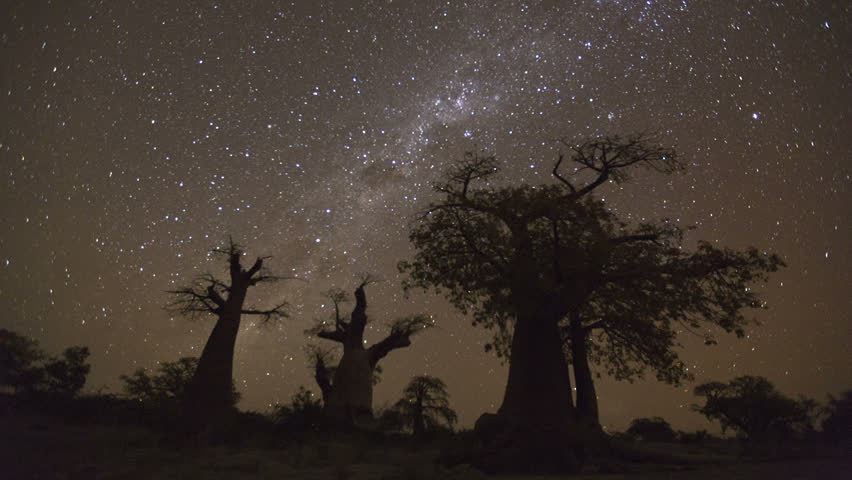 Star time-lapse, milky way galaxy moving across the night sky and moon rising with baobab trees in the foreground, Botswana