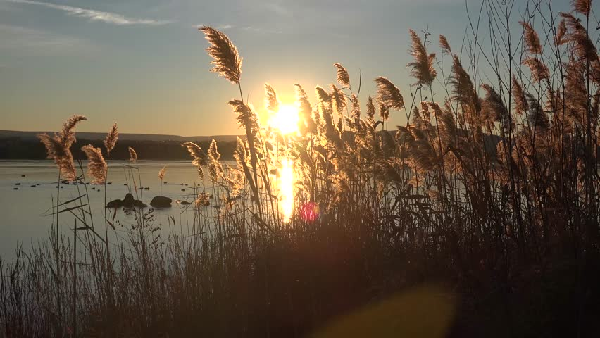 sun breaking through reeds near Columbia River