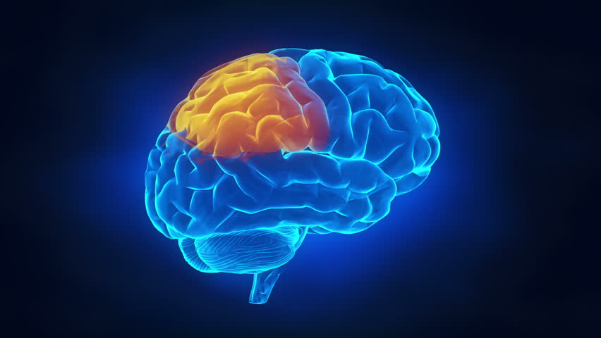 Stock video of human brain parts 1106764 shutterstock ccuart Gallery