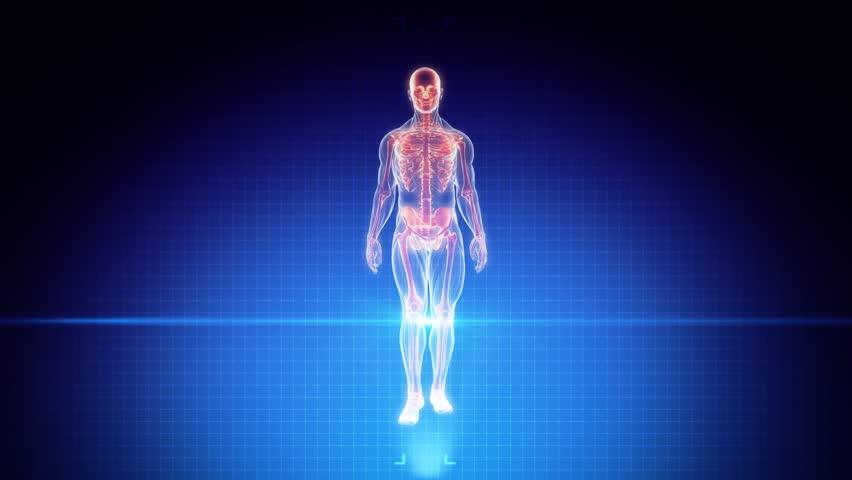 2 on human anatomy