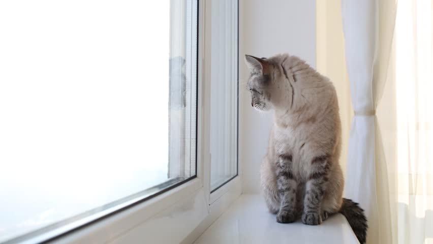Видео кот на окне