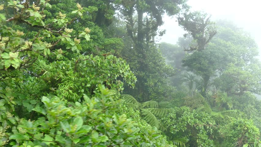 View of Monteverde National Park in Costa Rica, Central America. Nature, wilderness, natural landscape, jungle, rainforest, cloud forest, trees canopy, aerial view from sky tram