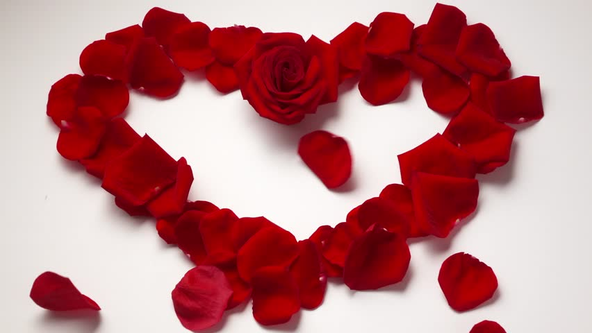 Red Rose Inside Rose Petals In Heart Shape Royalty Free Stock ...