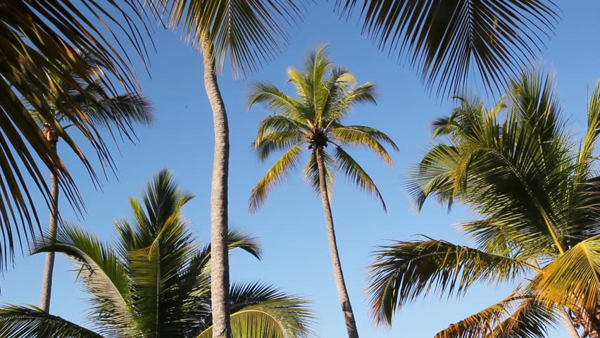 branch and palm trees