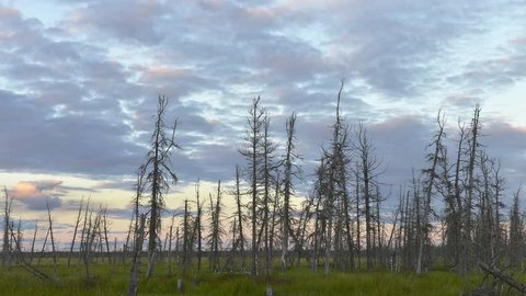 Timelapse of forming and flying clouds over the dead wood in Siberia, Yamal, Russia