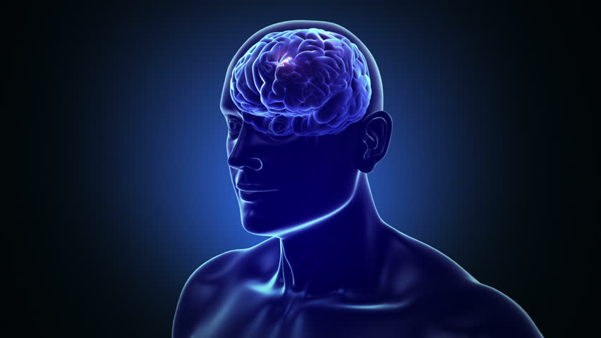 Human head and brain with neurons flashing. Electric impulses. Biology. Loopable. Dolly in inside a 3D human head to a brain with neurons during synapses. More options in my portfolio.