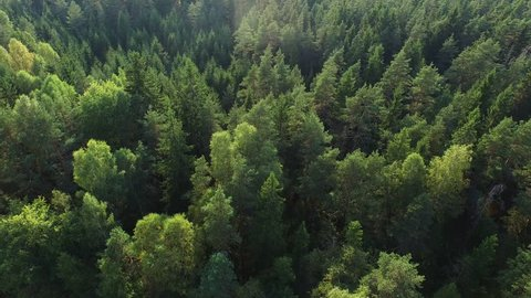Aerial drone shot over the north european forest. Shot in 4K (UHD).