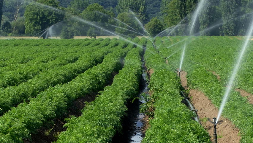 Agriculture irrigation during a dry and hot summer