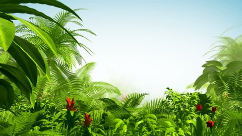 Growing tropical forest