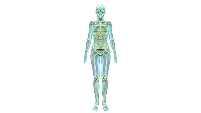 Full Body Green Glowing Scan Of Human Anatomy Showing Muscles Bones
