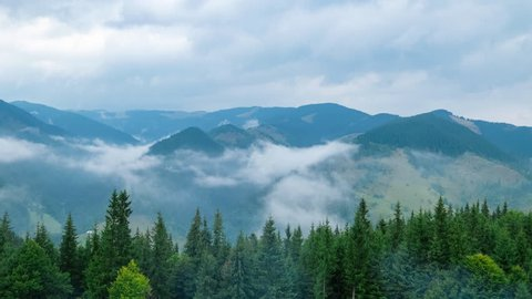 Time lapse clouds moving over pine tree highland forest. Foggy morning landscape at Carpathian mountains. Ukraine destinations and nature