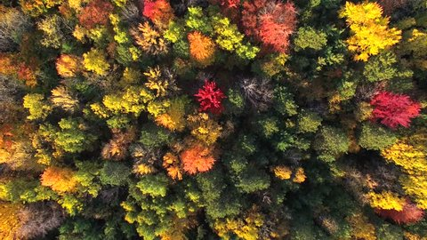 Scenic Aerial of Autumn Colors, Trees, Forests.