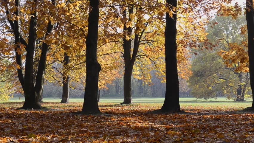 Colorful Autumn Trees In Park, With Golden Yellow Leaves On Path ...