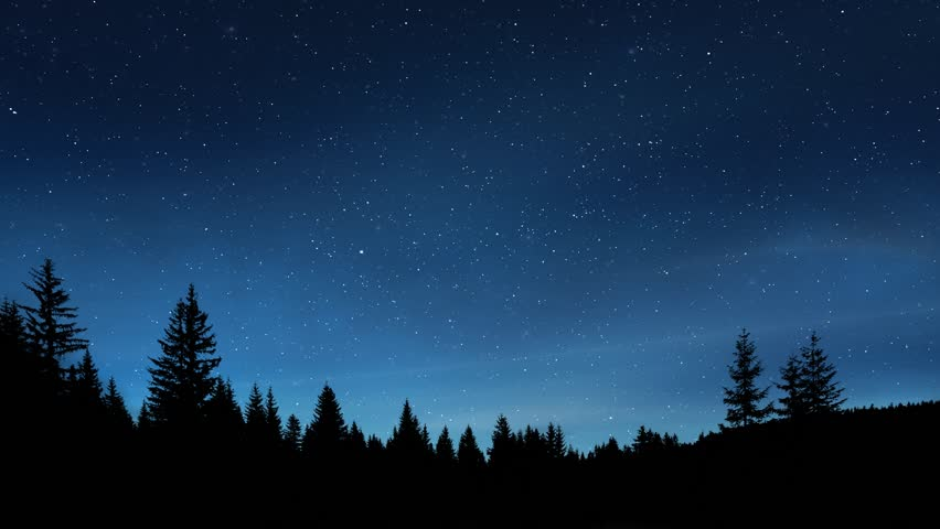 Night sky time lapse over pine trees
