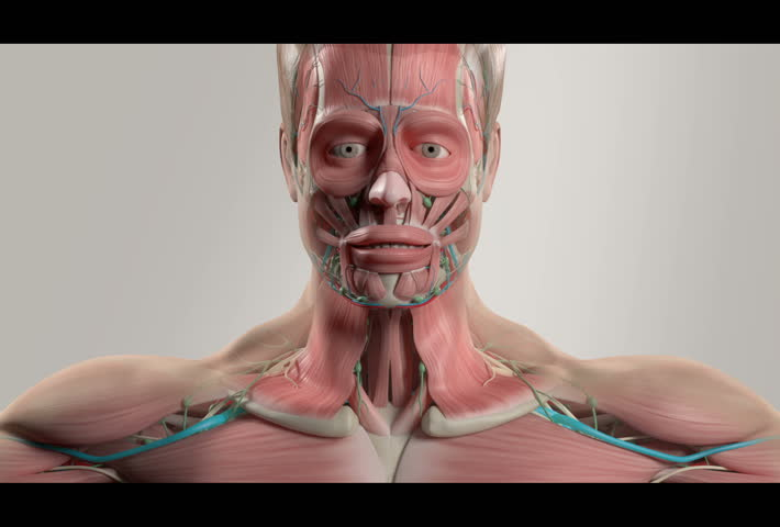 Animated anatomy videos