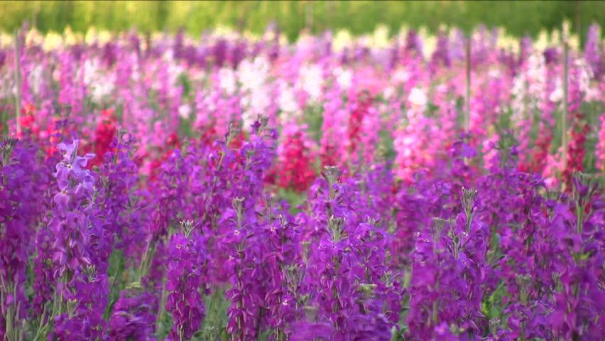 Field of flowers blowing in the breeze.