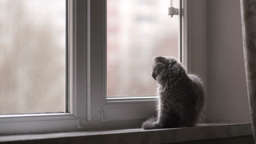 Little Gray Cat Sits On A Windowsill And Clean. Bright Day, Cloudy Weather.