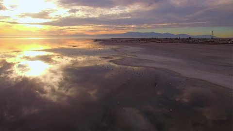 Aerial (drone) 4K HD video of flying on the beach with birds towards the sunset/sunrise. Birds are flying underneath, on top, and on the side of the frame.