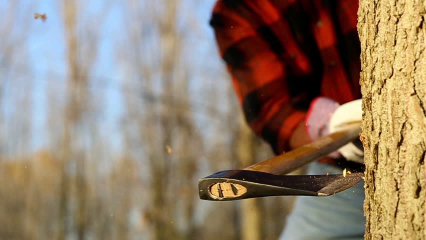 Senior lumberjack cutting tree with axe in the forest